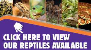 View reptiles available from Kellyville Pets