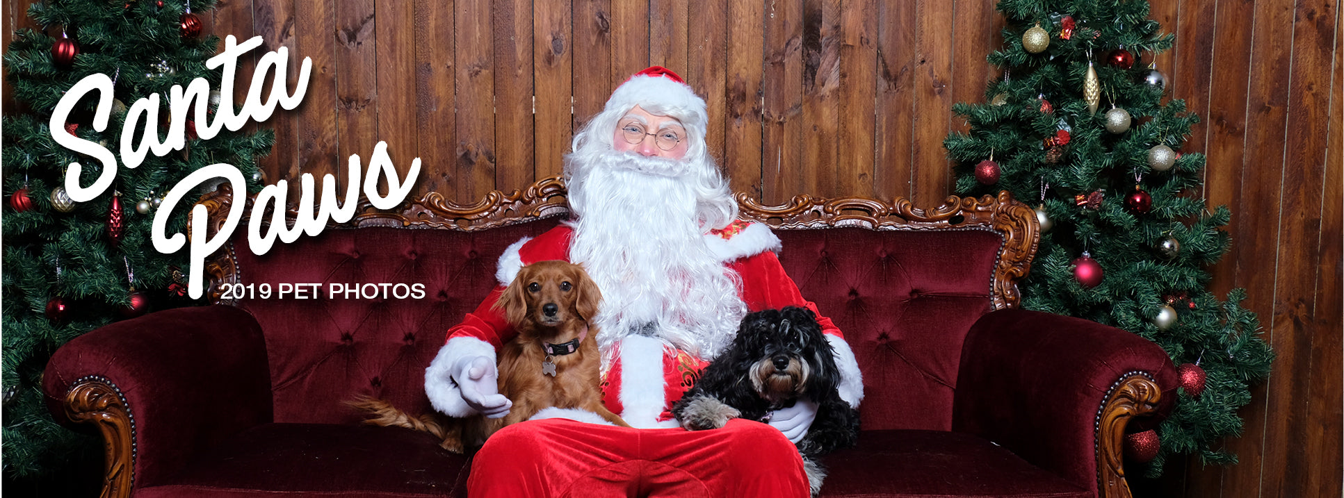 Santa Pet Photos Sydney 2019