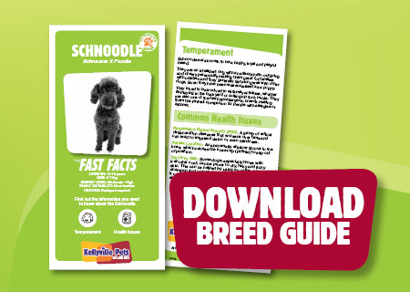 Download Schnoodle breed guide