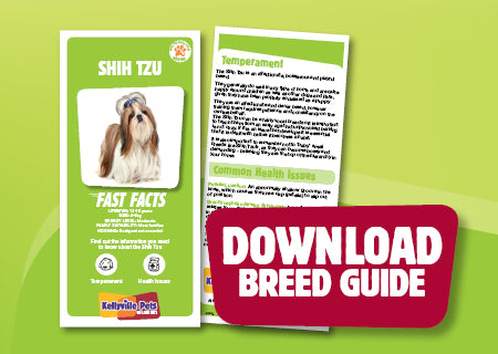 Download Shih Tzu breed guide