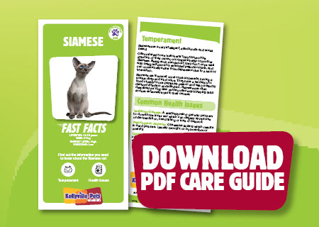 Download Siamese PDF care guide