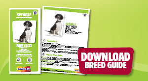 Download Speagle breed guide