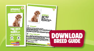 Download Spoodle breed guide