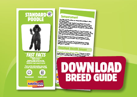Download Standard Poodle breed guide
