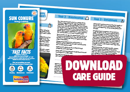 View Sun Conure Care Guide