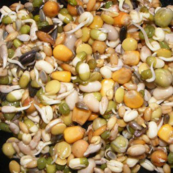 Birdzone Chunky Sprouts 250g