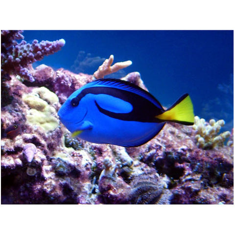 Tangs For Sale