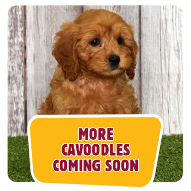 More Puppies coming soon!
