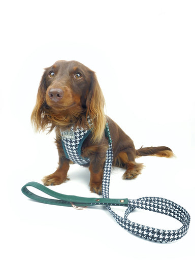 Dog Lead Emerald Envy PupStyle