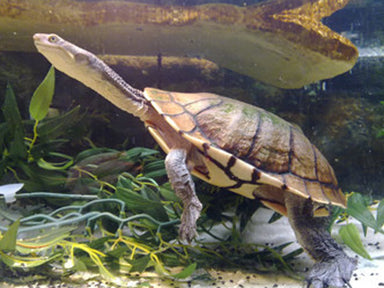 Reptiles For Sale Sydney Nsw Kellyville Pets