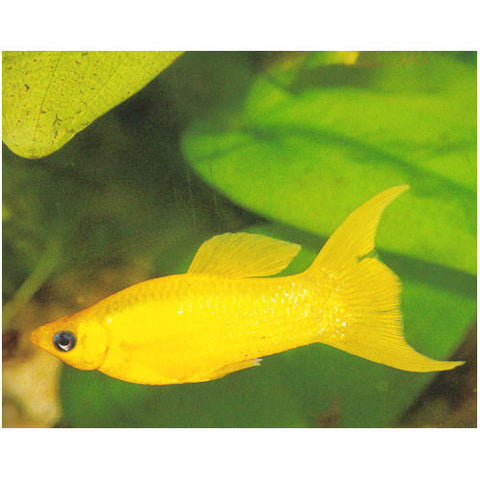Marine and Tropical Fish | Kellyville Pets