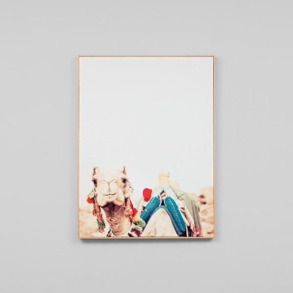 Bedouin Camel Canvas
