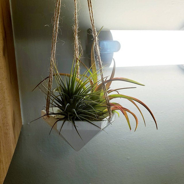 Hanging Planter | Air Plant Hanger | Air Plant Holder | Unique Planters | Macrame | | Succulent Planter | Unique Home Decor