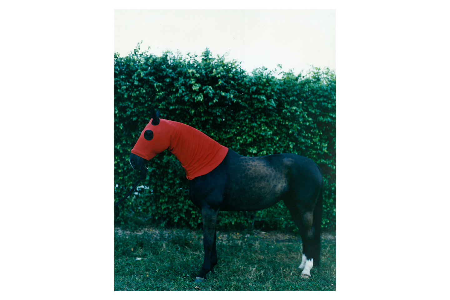 Horse with Red Hood, 1995