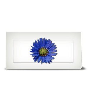 Aster, blue - gift tag