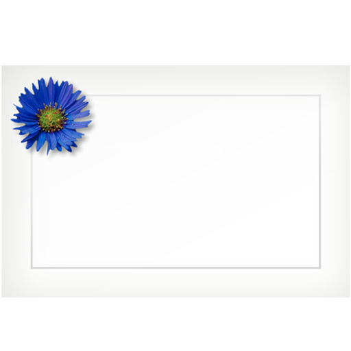 Aster, blue - flat cards (box of 10)