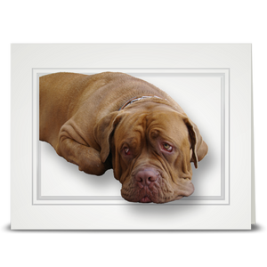 Bull Mastiff - folded card