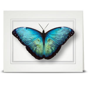 Morpho Butterfly, blue - folded card