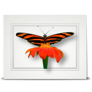 Orange Banded Butterfly - folded card
