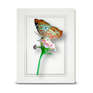 White Peacock Butterfly - folded card