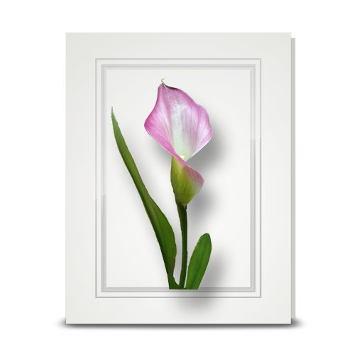 Lily, Pink Calla - folded card