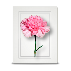 Carnation, Pink - folded card