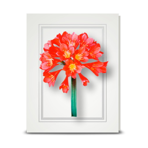 Clivia - folded card