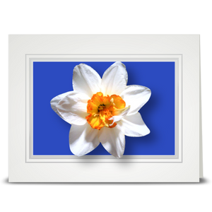 Daffodil, white - folded card