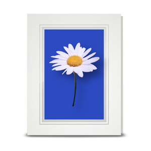 Daisy, White - folded card