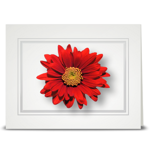 Daisy, red - folded card