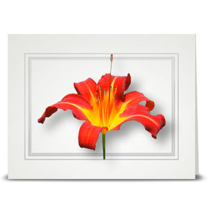 Lily, Daylily - folded card