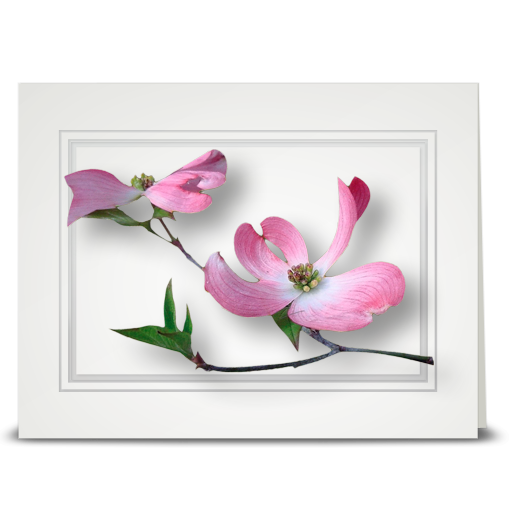 Dogwood, pink - folded card