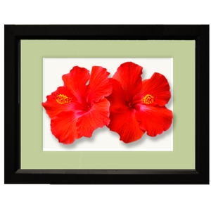 Hibiscus, double red - framed