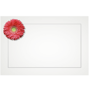 Gerbera, salmon - flat cards (box of 10)