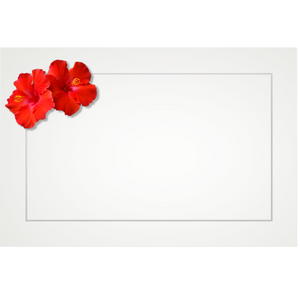 Hibiscus, double red - flat cards (box of 10)