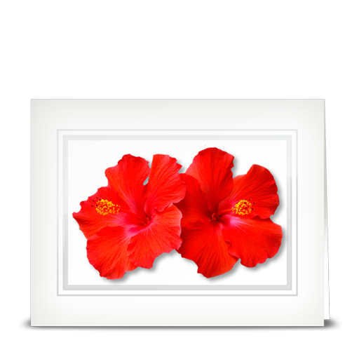 Hibiscus, double red - folded card