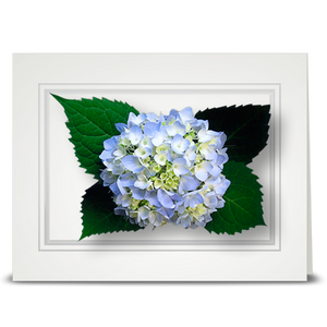 Hydrangea, light blue - folded card