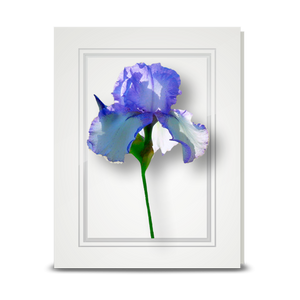 Iris, Back-lit - folded card