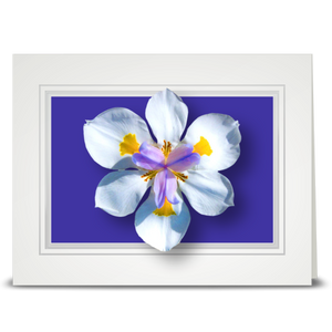 Iris, Disneyland - folded card