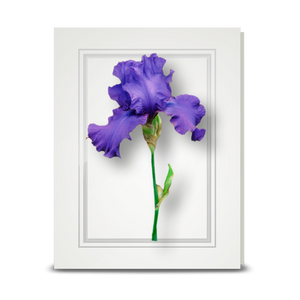 Iris, Purple - folded card