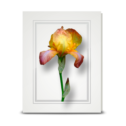 Iris, Sunset - folded card
