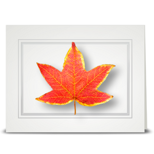 Sweet Gum Leaf - folded card