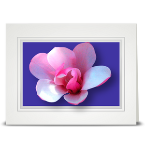 Magnolia, Pink - folded card