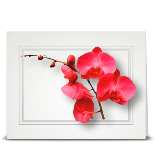 Orchid, pink vining - folded card