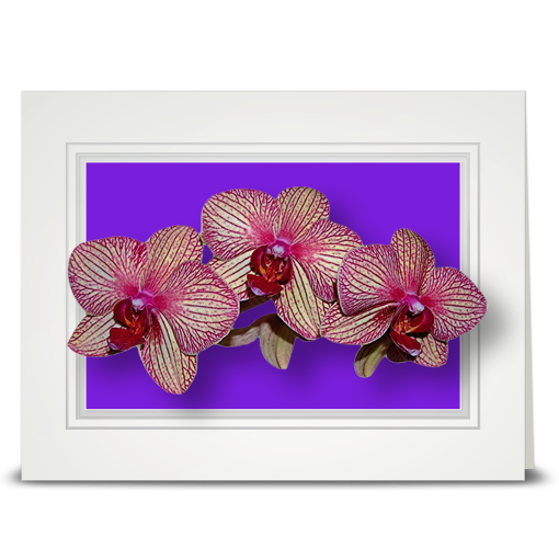 Orchid, veined - folded card