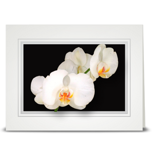 Orchid, white - folded card