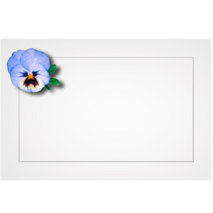 Pansy, light blue - flat cards (box of 10)