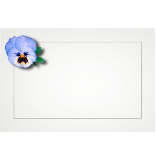 Assorted floral - flat cards (box of 10)