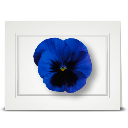 Pansy, royal blue - folded card