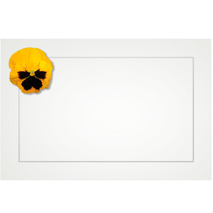 Pansy, yellow - flat cards (box of 10)